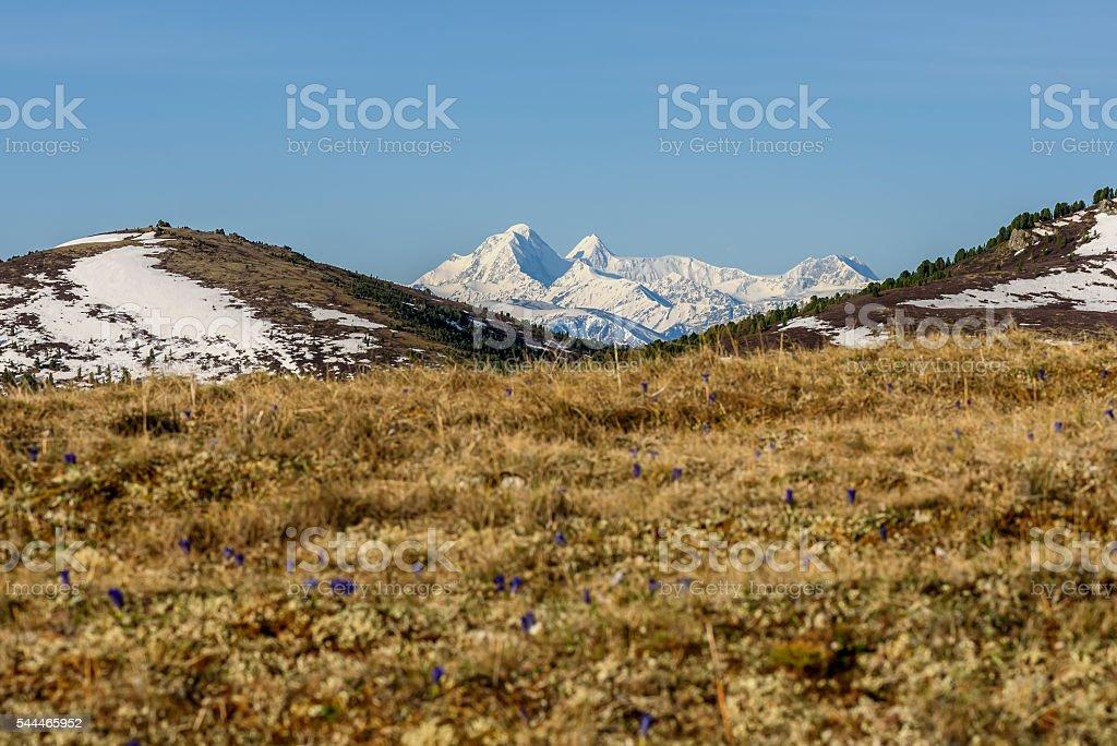 flowers dry grass mountain snow stock photo