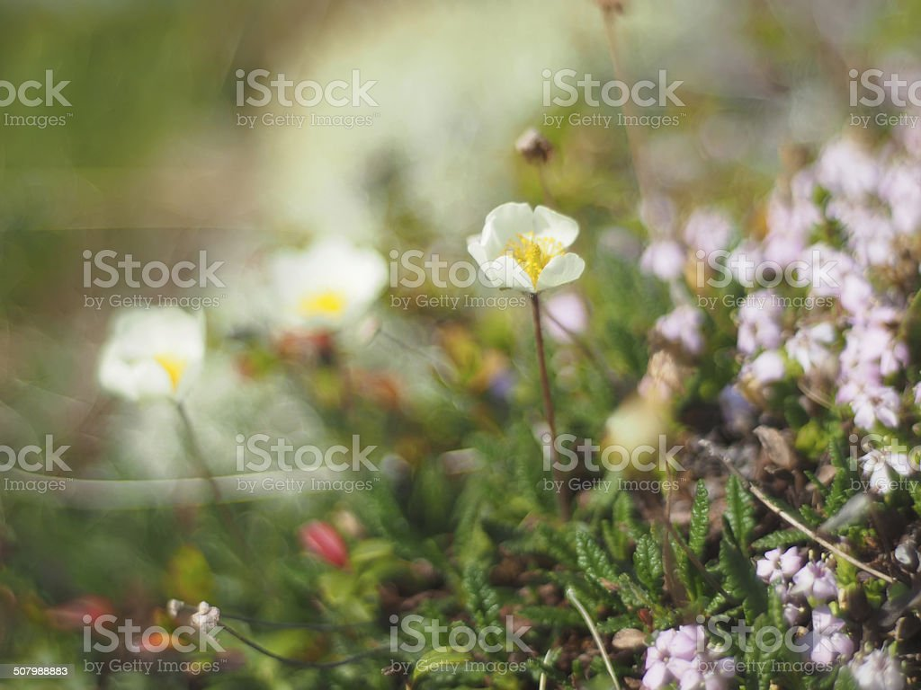 flowers dryads stock photo