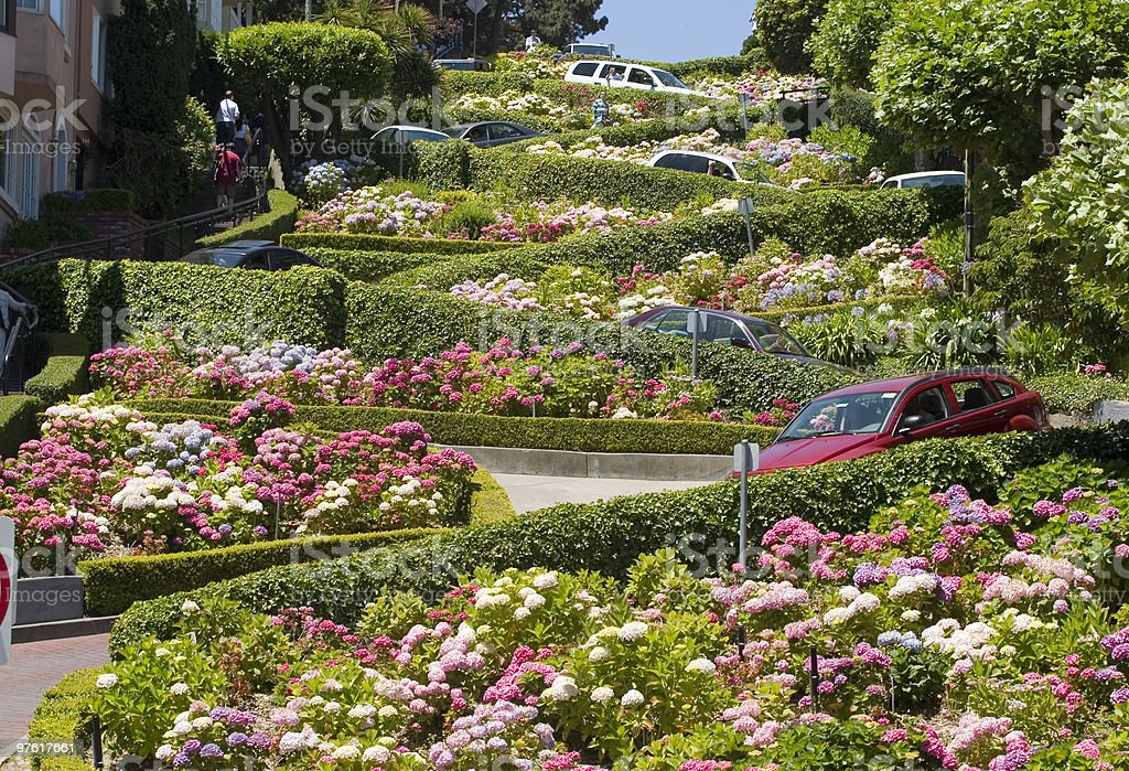 Flowers featured on Lombard Street in San Francisco stock photo