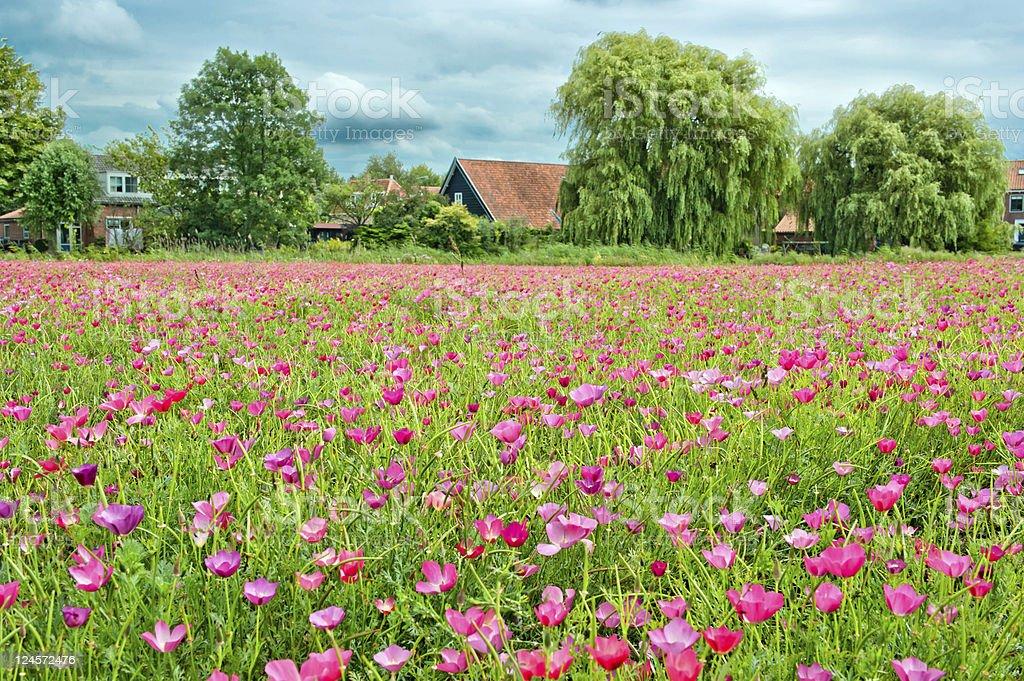 Flowers field royalty-free stock photo