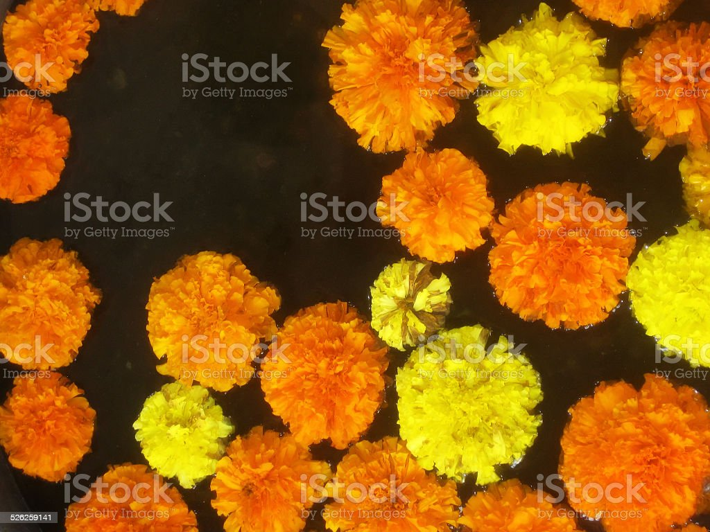 Flowers Floating stock photo