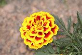 Flowers - Flores