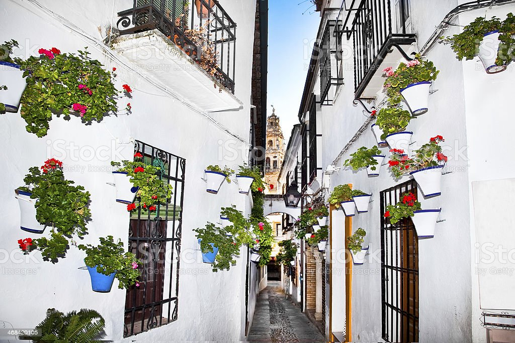 Flowers flowerpot on the walls in streets of Cordoba. Spain stock photo