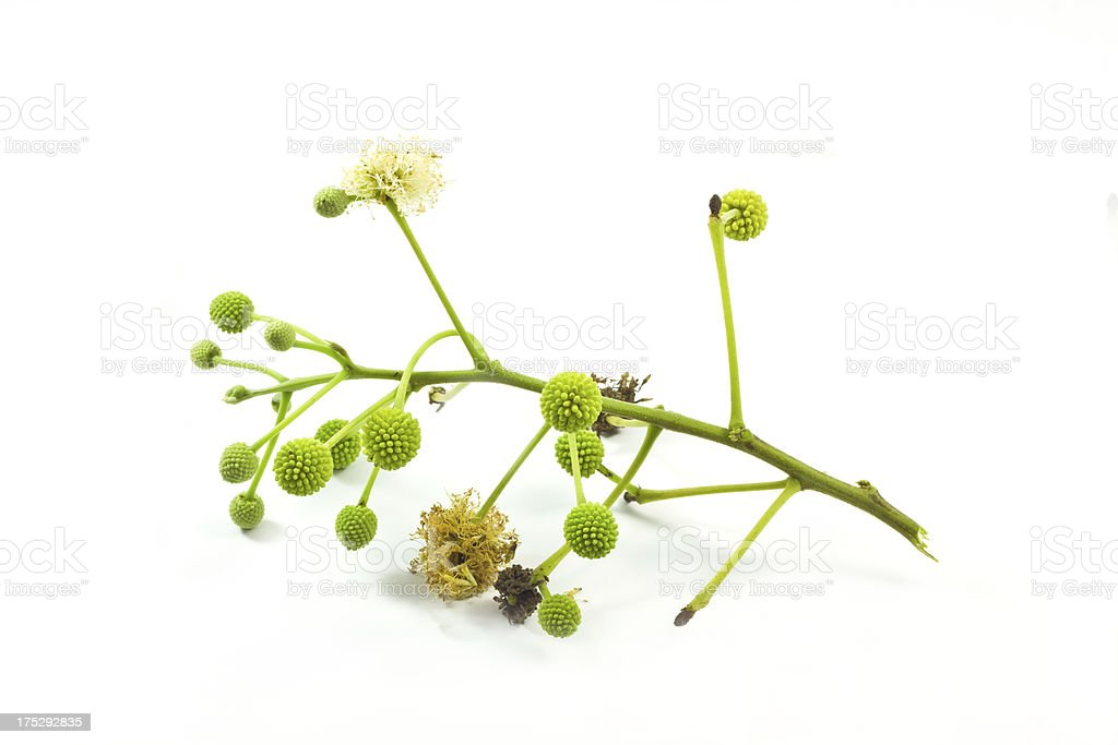 Flowers for animal feed. royalty-free stock photo