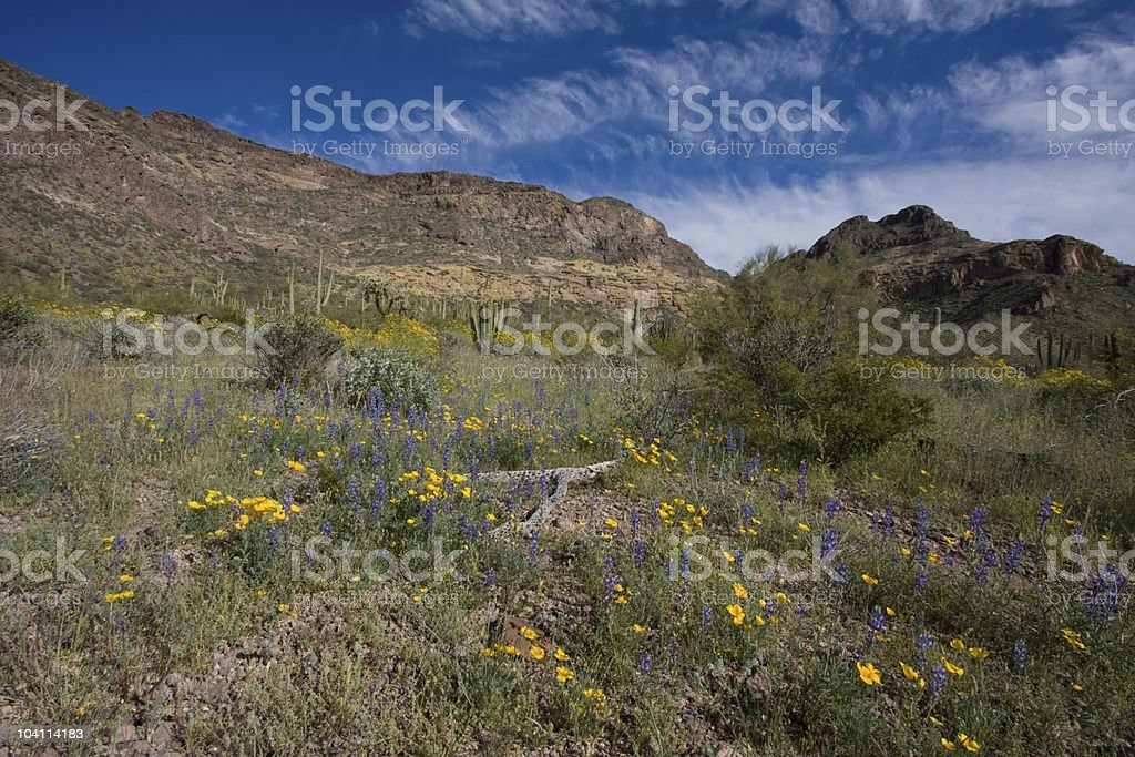 Flowers Forever royalty-free stock photo