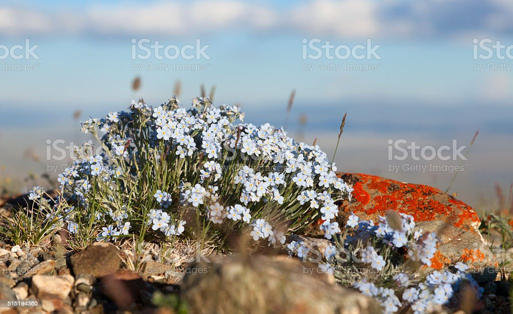 flowers forget me note stock photo