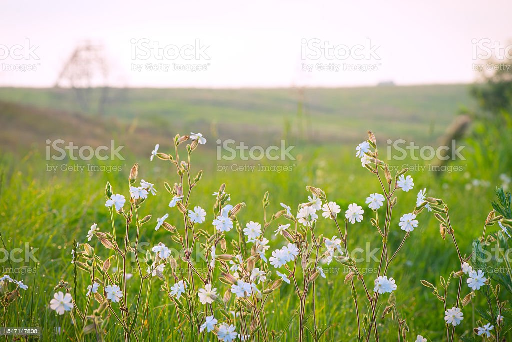 Flowers from nature, grass stock photo