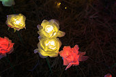 LED flowers garden at night