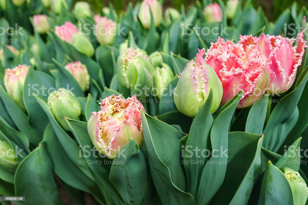 Flowers garden royalty-free stock photo
