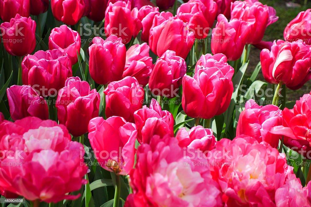 Flowers garden royalty-free stock photo