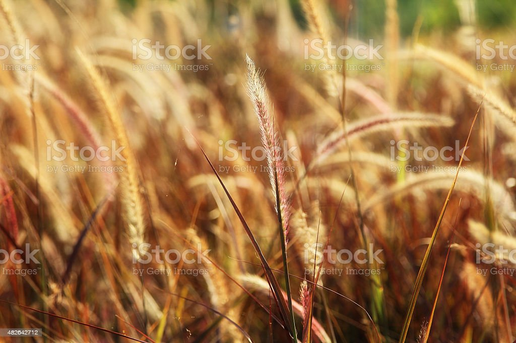 Flowers grass blurred stock photo