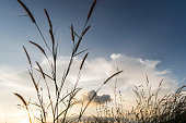 flowers grass with sky sunset background in winter