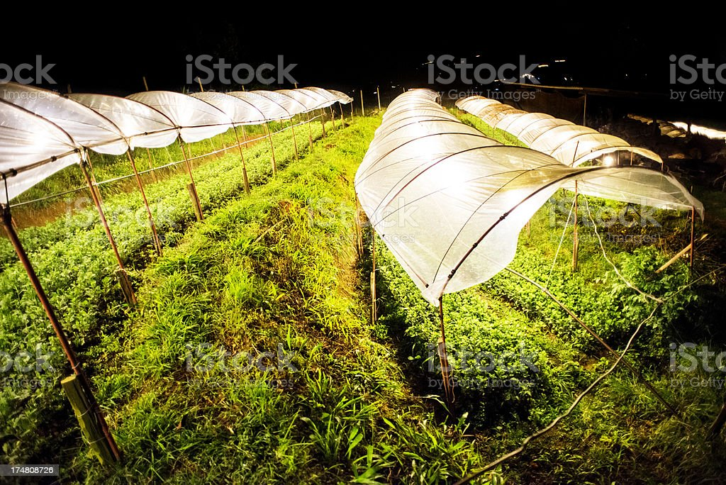 Flowers Growing at Night stock photo