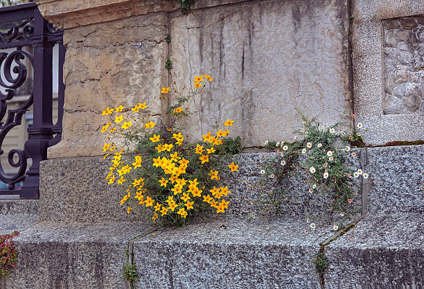 Image result for flowers growing through the pavement