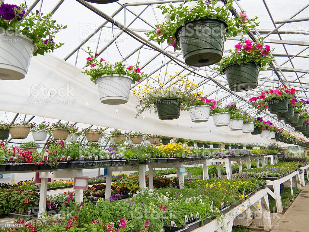 Flowers growing in foil hothouse of garden center stock photo