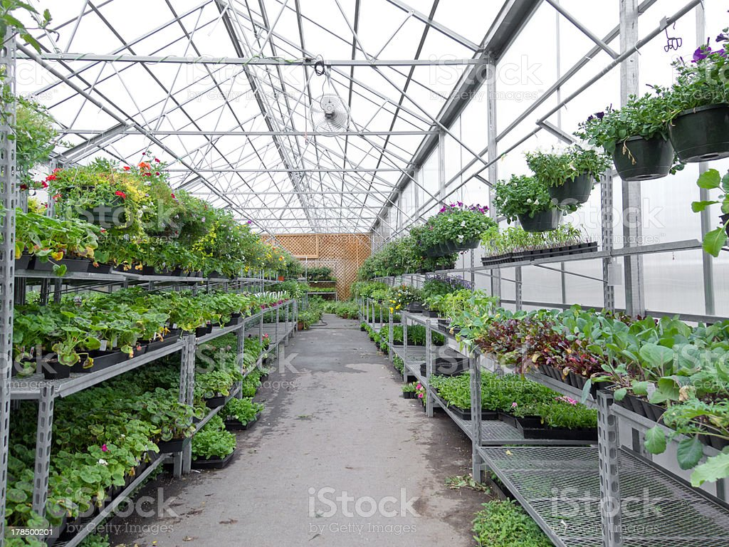 Flowers growing in foil hothouse of garden center royalty-free stock photo