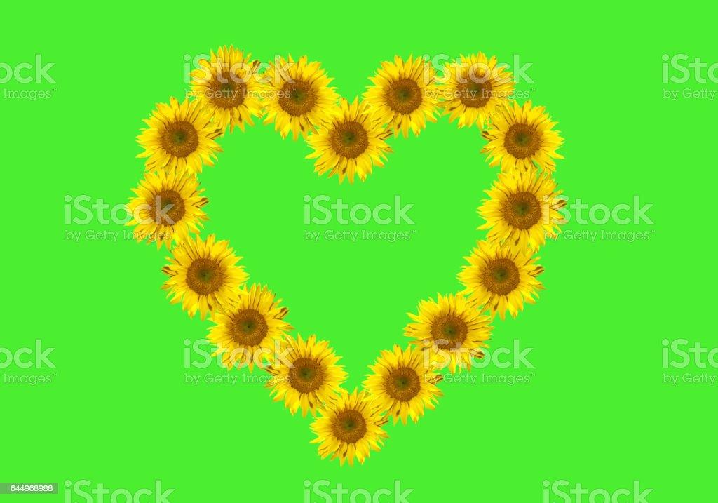 flowers heart, Helianthus, annuus; stock photo