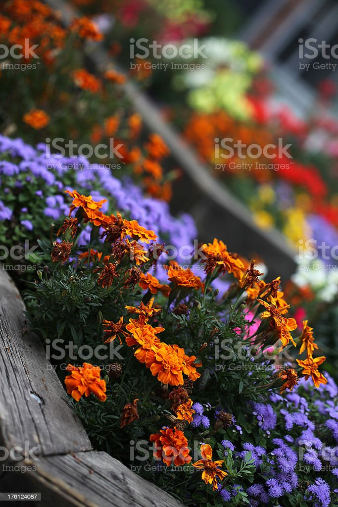 Flowers in a Box stock photo