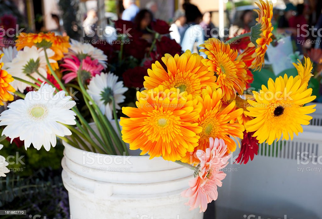 Flowers in a Bucket royalty-free stock photo
