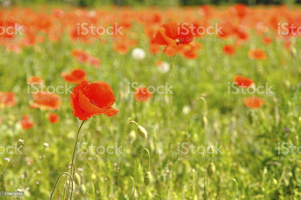 花のガーデン ロイヤリティフリーストックフォト