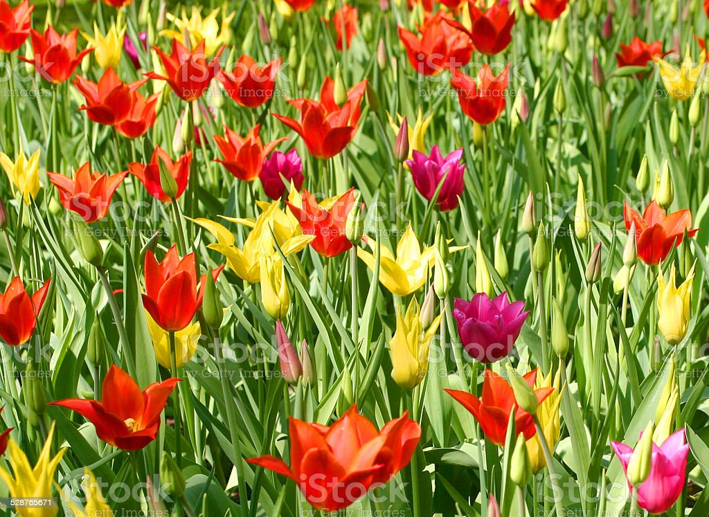 Flowers in a garden stock photo