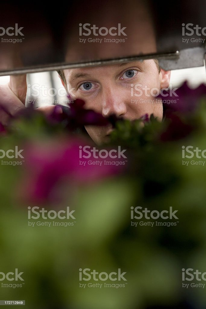 Flowers in a glasshouse stock photo