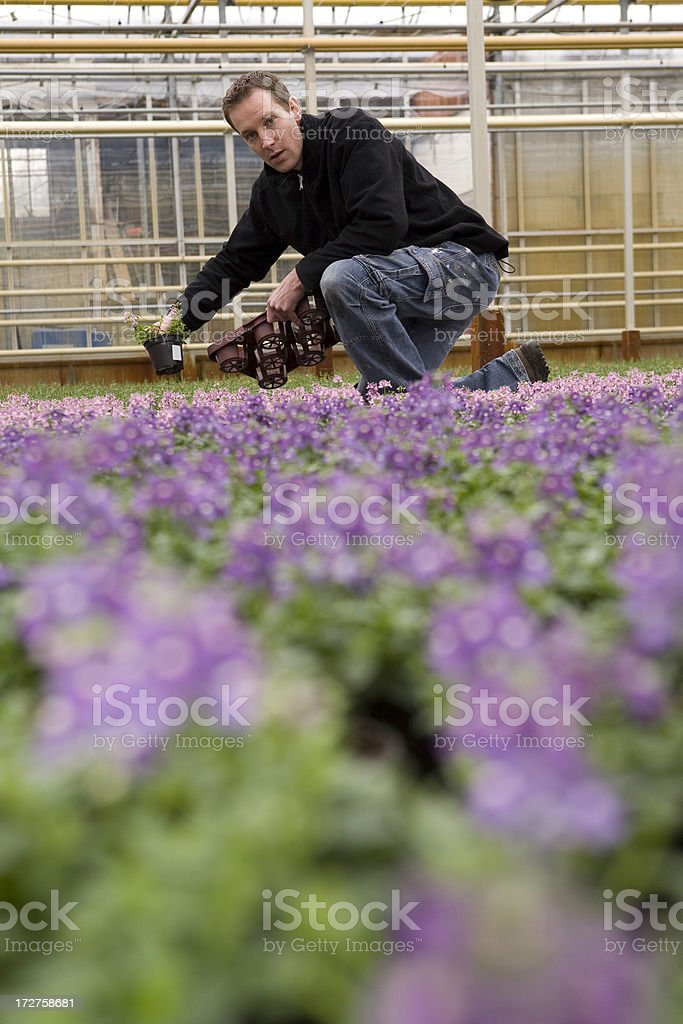 Flowers in a glasshouse royalty-free stock photo