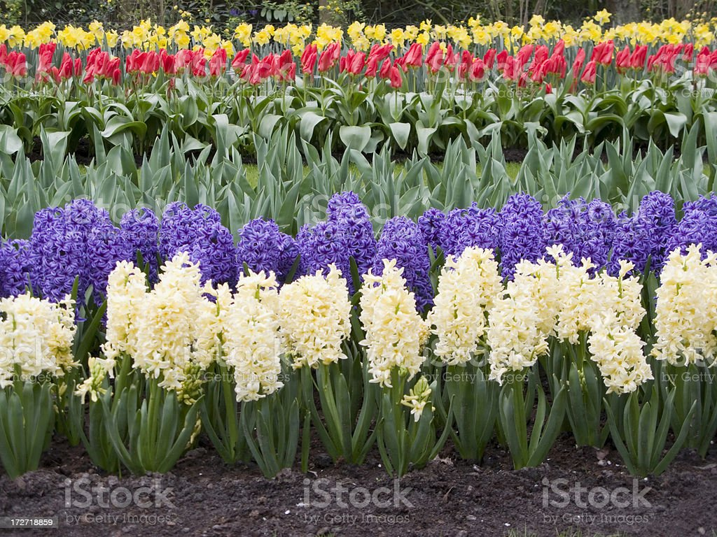 Flowers in a row stock photo