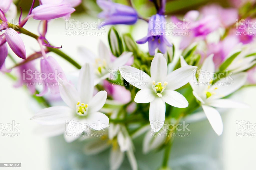 Flowers in a vase stock photo