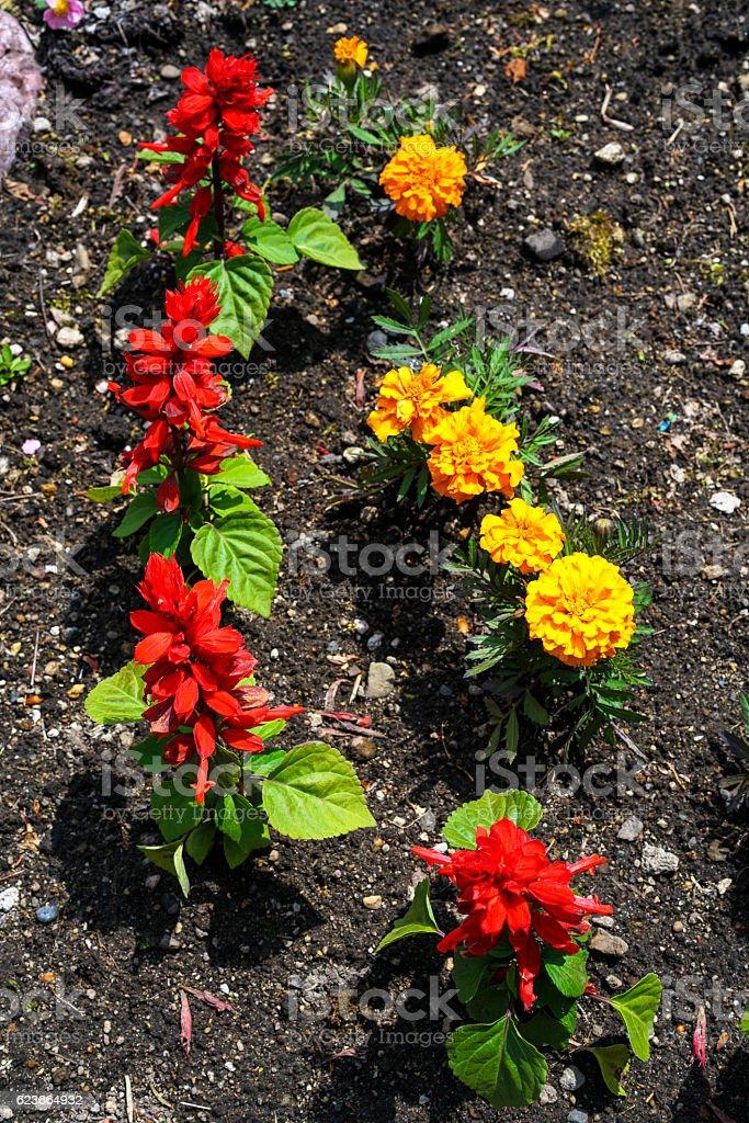 Flowers in   Abashiri garden on Hokkaido, Japan stock photo