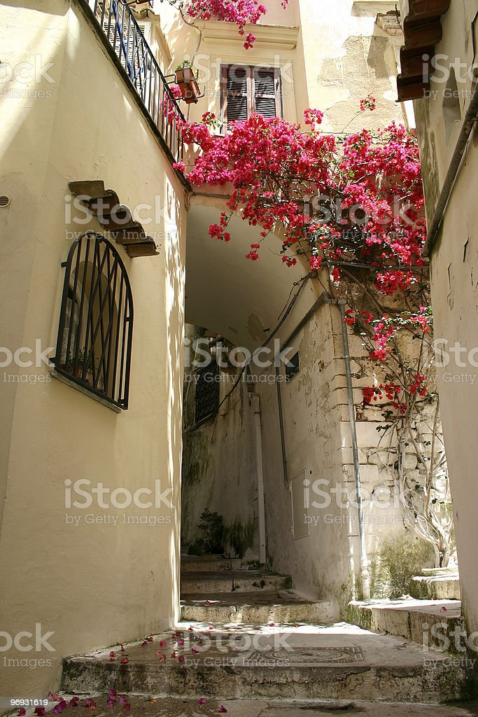 Flowers in alley royalty-free stock photo