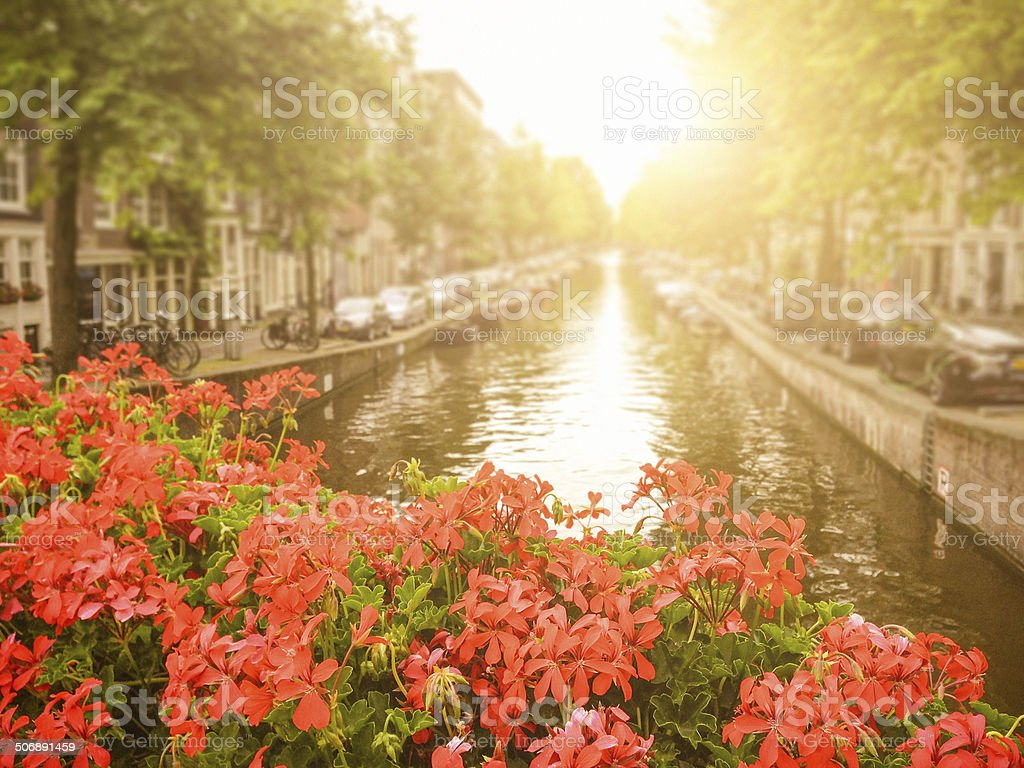 flowers in amsterdam stock photo