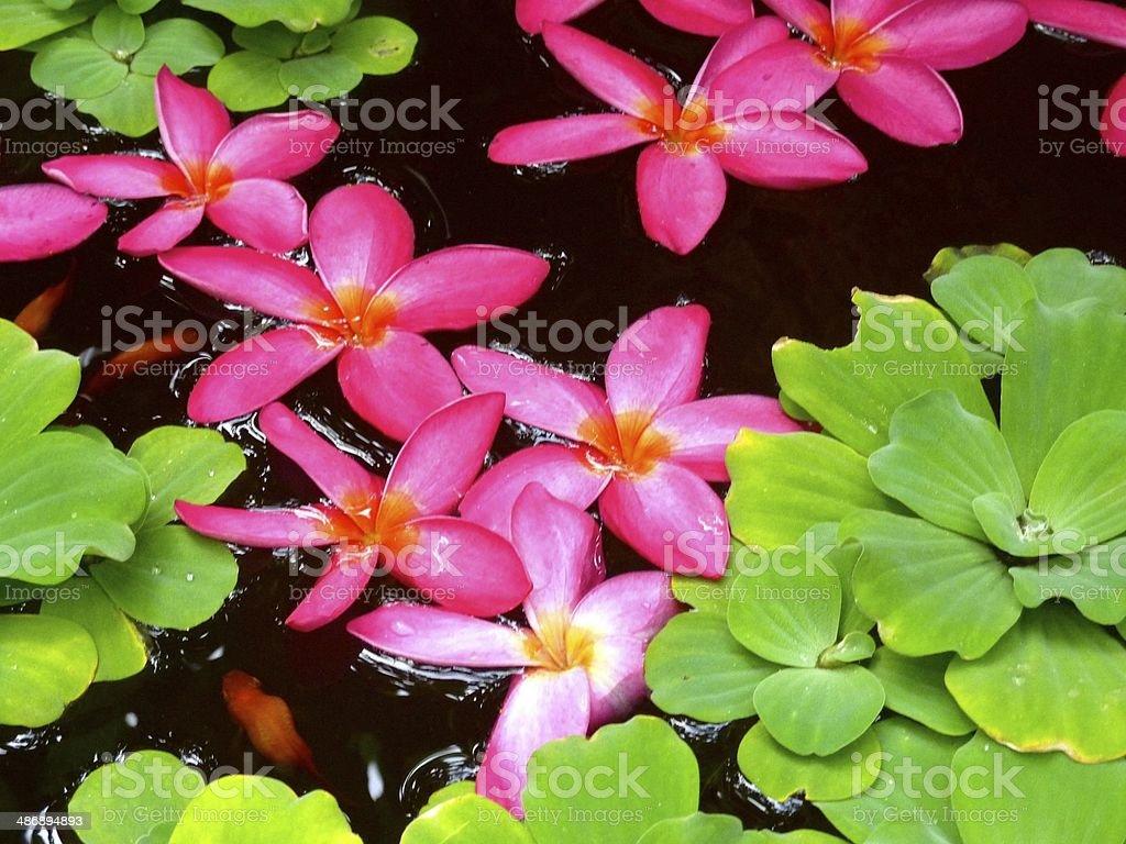 Flowers in Bangkok royalty-free stock photo