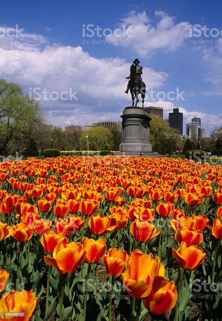 Flowers in Boston Commons City Park with Patriot Statue royalty-free stock photo
