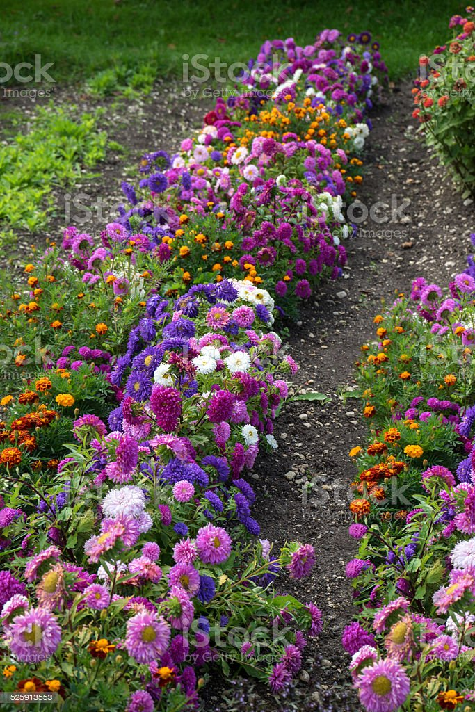Flowers in cottage garden royalty-free stock photo
