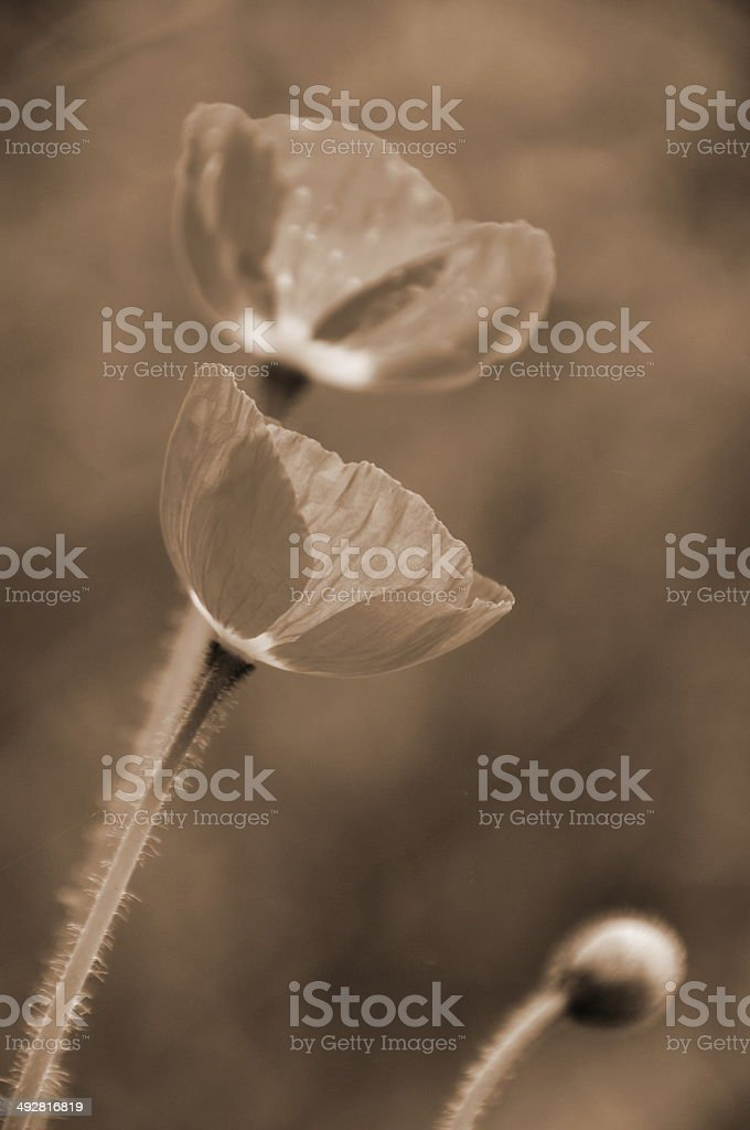 Flowers in Fantasy royalty-free stock photo