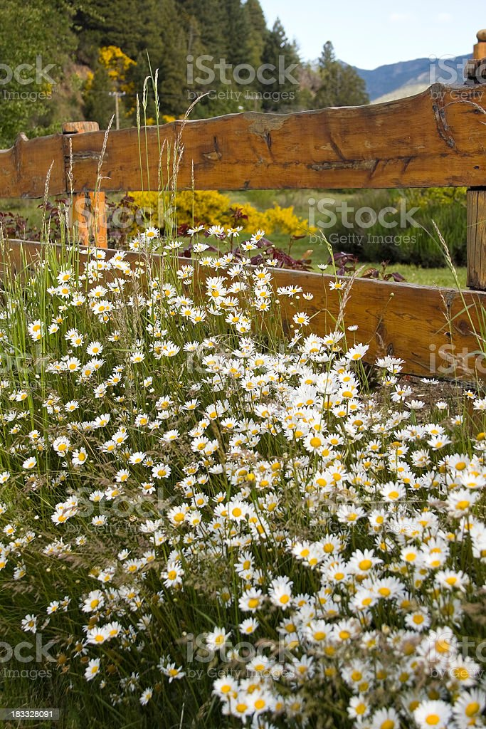 Flowers in fence royalty-free stock photo