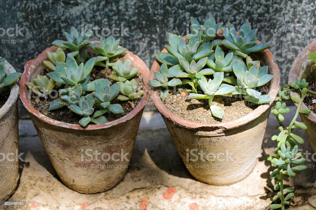 Flowers in flower pot stock photo