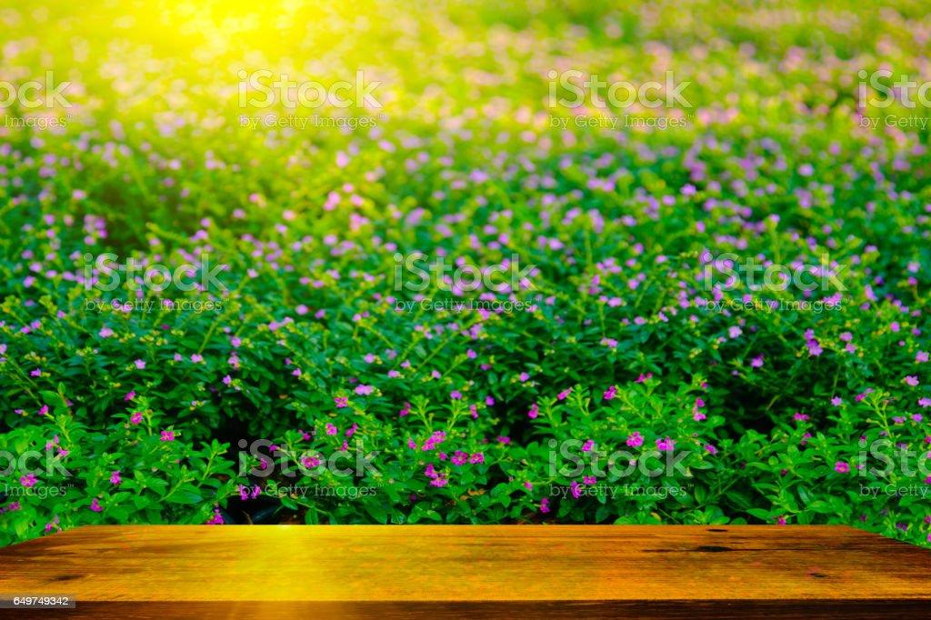 Flowers in Garden. stock photo