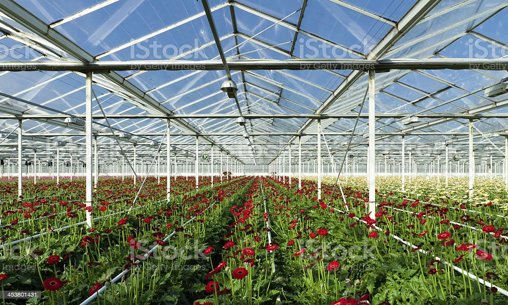 flowers in greenhouse royalty-free stock photo