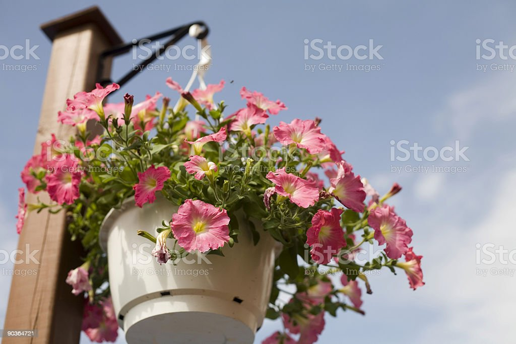 Flowers in hanging basket royalty-free stock photo