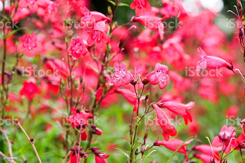 Flowers In Kew Gardens near London,  U.K. stock photo
