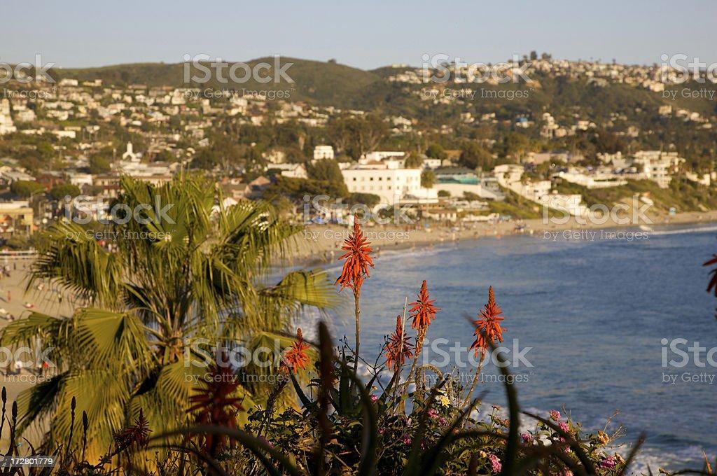 Flowers in Laguna Beach royalty-free stock photo