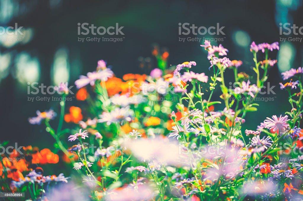 Flowers in light stock photo