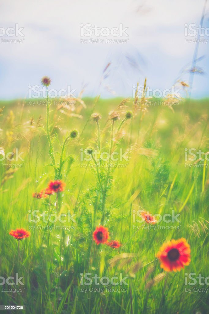 Flowers in Motion: Field of beautiful wildflowers. CO, USA stock photo