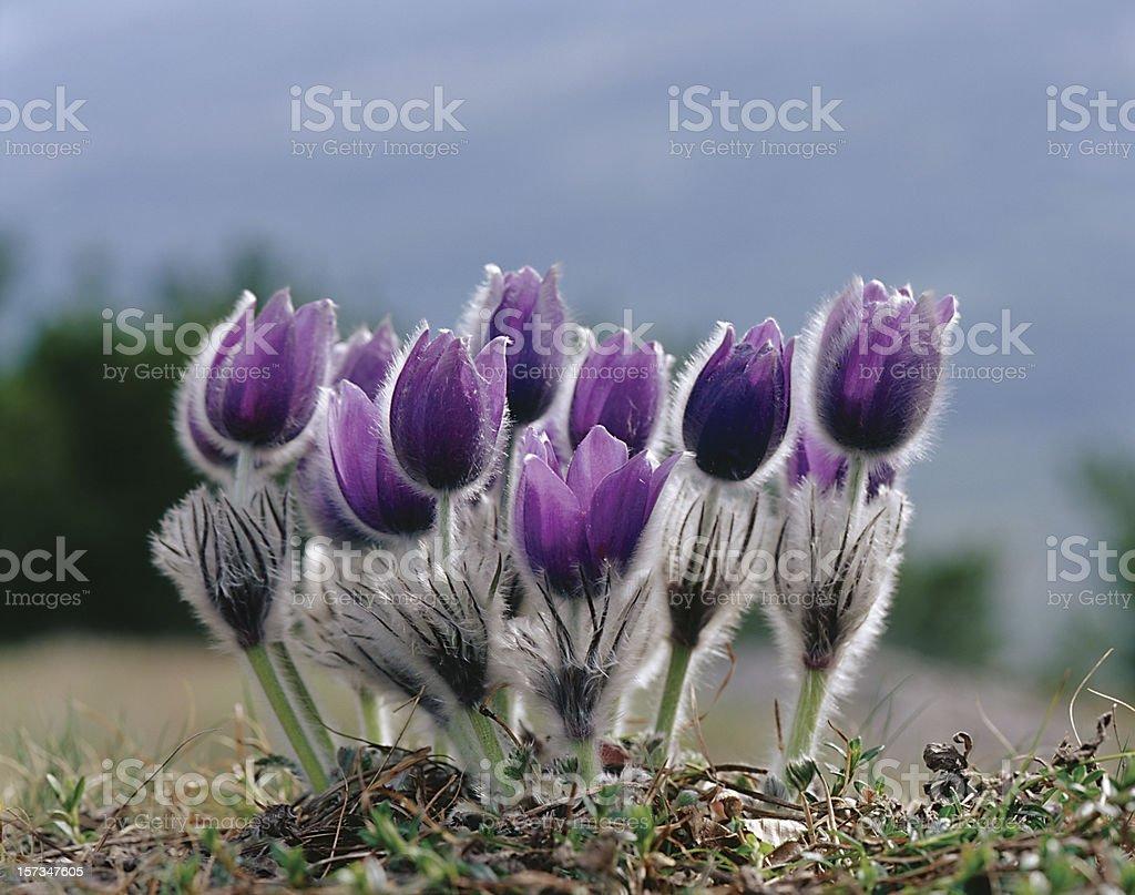 Blumen in der Natur Lizenzfreies stock-foto