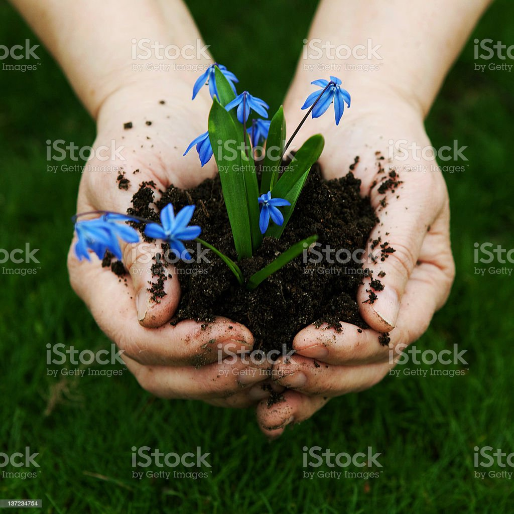 Flowers in palm. royalty-free stock photo
