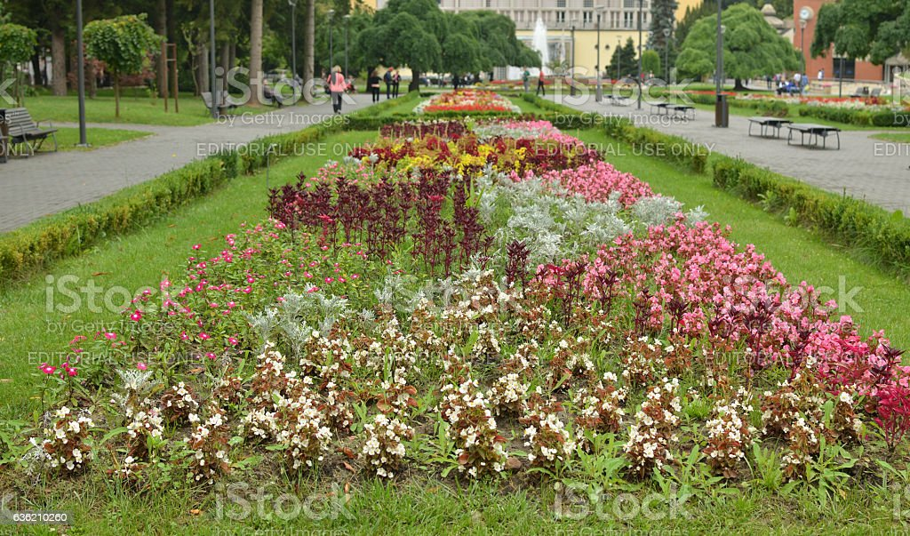 Flowers in Park stock photo