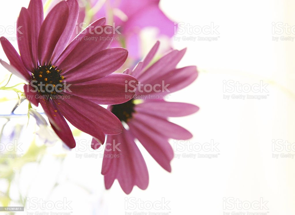 Flowers In Pink stock photo