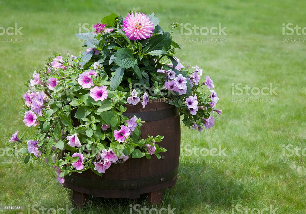 Flowers in planter stock photo